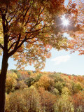 New York State, Allegheny State Park, Autumn in the Forest Photographic Print