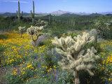 Arizona, Organ Pipe Cactus National Monument Photographic Print