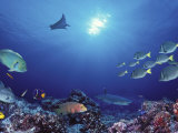 School of Fish Swimming Near a Reef, Galapagos Islands, Ecuador Fotografie-Druck