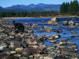 Wolf on Rocks at Edge of Flathead River Photographic Print