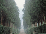 "The Walk in the Boboli Gardens Know as the ""Viottolone"" Photographic Print"