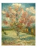 Peach Blossoming (Souvenir De Mauve) Giclée-Druck