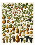 Edible Fruits Giclee Print