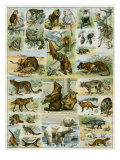 Some Wild Animals of the World Giclee-vedos