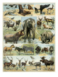 Some Wild Animals of the World Impressão giclée