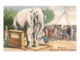 Barnum's White Elephant on Scale Print