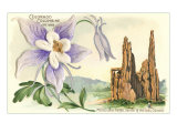 Columbine, Garden of the Gods Posters