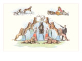 Animals Forming Pyramid Posters