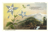 Columbine and Mountain Posters