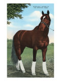 Whirlaway, Kentucky Derby Winner Posters