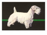 Sealyham Terrier Posters