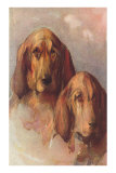 Two Bloodhounds Posters