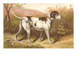 Hunting Dog, Pointer, Victorian Trade Card Posters