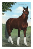 Whirlaway, Kentucky Derby Winner Print