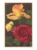 Rose Varieties Posters