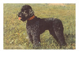 Black Standard Poodle on Grass Print