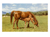 Mare and Foal in Pasture Posters