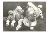 Three Trimmed Miniature Poodles Psters