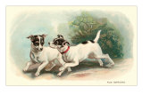 Two Fox Terriers Posters