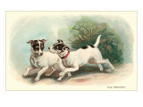 Two Fox Terriers Poster