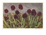 Spiky Flowers in Field, Vanilla Orchids Posters