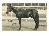 Dan Patch Poster