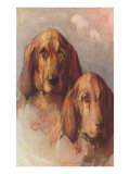 Two Bloodhounds Print