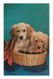 Cocker Spaniel Puppies in Basket Photo