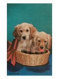 Cocker Spaniel Puppies in Basket Posters