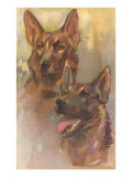 Two German Shepherds Posters