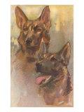 Two German Shepherds Posters