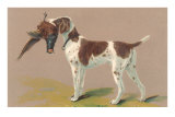 German Short-Haired Pointer with Pheasant Prints