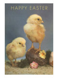 Chicks with Rock and Flowers Posters
