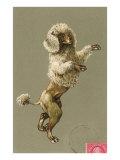 Trimmed Poodle Dancing on Back Legs Poster
