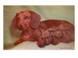 Mother Dachshund and Two Pups Posters