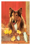 Collie with Chicks Posters