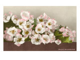 Peach Blossoms Print