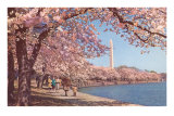 Cherry Blossoms and Washington Monument, Washington, D.C. Print