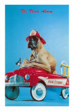 Great Dane in Toy Fire Wagon, Third Alarm Posters