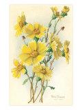 Yellow Wildflowers Print