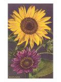 Sonnenblumen Giclée-Premiumdruck