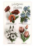 Français, le langage des fleurs Affiche