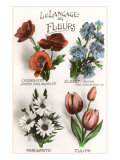 French Language of Flowers Print
