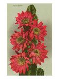 Red Cactus Flowers Kunstdrucke