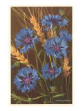 Corn Flowers and Wheat Posters
