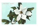 Magnolia Blossom Posters