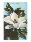 Magnolia Blossom Print