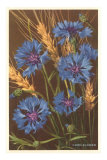 Corn Flowers and Wheat Poster
