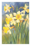Daffodils Posters