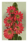 Red Cactus Flowers Posters
